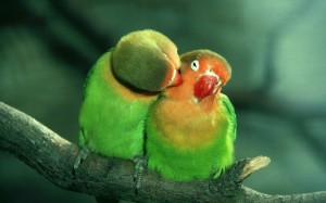 forest_birds_animals_parrots_1920x1200_wallpaper_Wallpaper_1920x1200_www.wallpaperhi.com